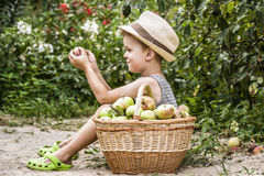 A child and a basket of apples Stock Photography
