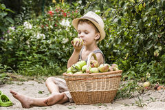 A child and a basket of apples Royalty Free Stock Photos