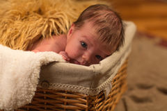 The child in a basket Royalty Free Stock Photo