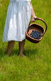 Child with basket of blueberries Stock Photos