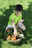 Child and basket with vegetables Royalty Free Stock Image