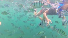 Child bathe in the sea with fish. Scuba Diving in Masks. Child swim in the sea with fish. Snorkelling stock video