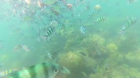 Child bathe in the sea with fish. Scuba Diving in Masks. Child swim in the sea with fish. Snorkelling stock video footage