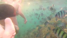 A child bathes in the sea with a fish in the sun. Scuba diving in masks. Tropical island. Child swim in the sea with fish. Snorkelling stock video footage