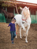 Child and bay horse in field Royalty Free Stock Images