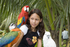 Child with beautiful parrots royalty free stock photo