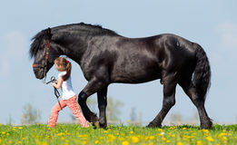 Child and big black horse in field. Child and big black draft horse walking in pasture at spring Royalty Free Stock Photography