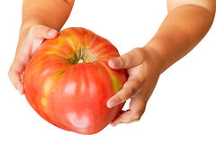 Child with a big tomato Stock Photography