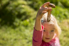 Child blond girl holding fresh mushrooms outside in the forest Royalty Free Stock Images