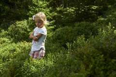 Child blond little girl picking fresh berries on blueberry field in forest. Child pick blue berry in the woods. Little girl playing outdoors. Summer family fun Royalty Free Stock Photo