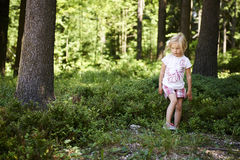 Child blond little girl picking fresh berries on blueberry field in forest. Child pick blue berry in the woods. Little girl playing outdoors. Summer family fun Royalty Free Stock Images