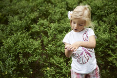 Child blond little girl picking fresh berries on blueberry field in forest. Stock Photo