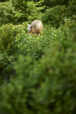 Child blond little girl picking fresh berries on blueberry field in forest. Royalty Free Stock Photos