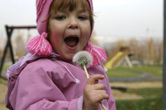 Child and a blow-ball. Child trying to blow a dandelion Royalty Free Stock Photography