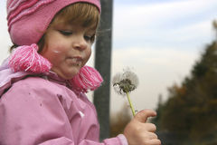Child and a blow-ball. Child trying to blow a dandelion Stock Image