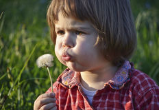 Child Blowing Dandelion Stock Photo