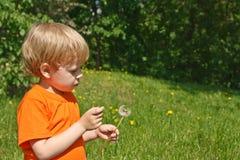 Child blowing dandelion Stock Image
