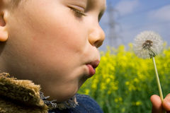 Child blowing a dandelion Royalty Free Stock Photos