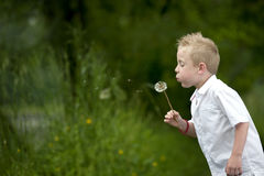 Child blowing a dandelion. Outdoors royalty free stock photo