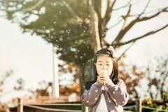 Child blowing a dandelion in a park stock photo