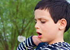 Child blowing dandelions Royalty Free Stock Images