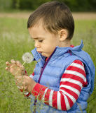Child blowing dandellion Royalty Free Stock Photo