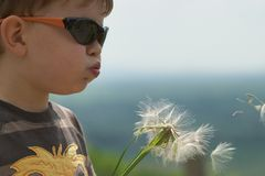 Child blowing Dandellion seed Stock Images