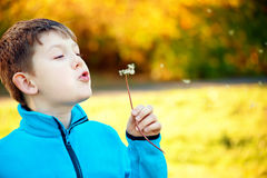 Child blowing Dandellion seed Royalty Free Stock Photography