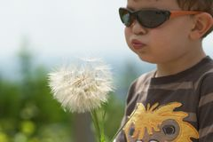 Child blowing Dandellion in spring Royalty Free Stock Images