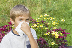 Child is blowing his nose. Flowers and green meadow behind him. Healthcare, medicine, allergy concept. Stock Photography