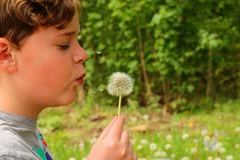 Child blowing at the seeds of a Dandelion. Young boy spreading the seeds of a dandelion by blowing Stock Image