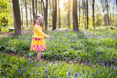Child with bluebell flowers in spring forest Royalty Free Stock Images