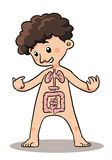 Child Body Organ Royalty Free Stock Photos