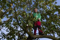 Child Boy on Apple Tree climbing. Royalty Free Stock Photo