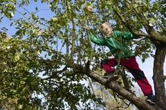 Child Boy on Apple Tree climbing. Royalty Free Stock Photos