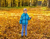 Child boy in autumn park with foliage. stock images