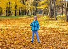 Child boy in autumn park with foliage. stock photography