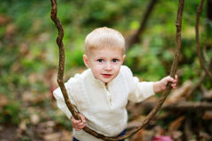 Child boy in a bright sweater with lianas in the forest. Kid boy in a bright sweater with lianas in the forest, autumn, summer royalty free stock images