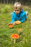 Child Boy examines toadstools in the forest Royalty Free Stock Images