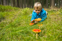 Child Boy examines toadstools in the forest Royalty Free Stock Image