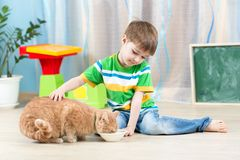 Child boy feeding red cat. At home Royalty Free Stock Photo