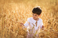Child boy in a field of wheat Stock Photos