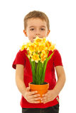 Child boy offering daffodil pot Stock Images
