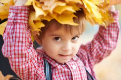 Child boy is posing with yellow fallen leaves on his head. Autumn city park, bright day royalty free stock photo