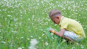 A child, a boy, sits in the grass, among the daisies, and examines his net, insects. Summer, outdoors, in the forest. Vacation with children stock footage