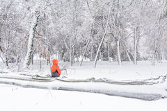 Child and broke down tree of snow. Horizontal view of child  Royalty Free Stock Images