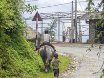 Child on buffalo, Sa Pa, Vietnam Royalty Free Stock Images