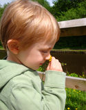 Child With Buttercup Stock Image