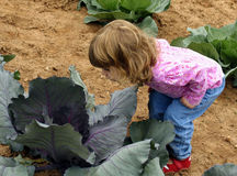 Child in cabbage patch Royalty Free Stock Photo