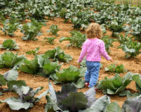 Child In the cabbage patch Stock Images
